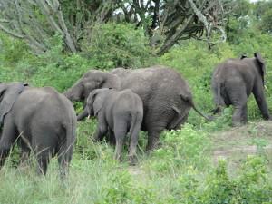 Elephant 3